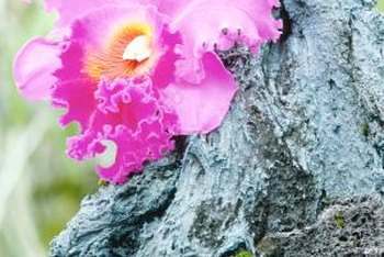 Certain trees produce flowers shaped like cattleya or other orchids.
