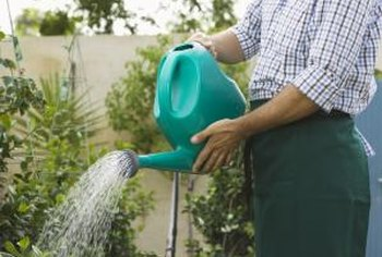 Hand watering plants in a greenhouse is a labor-intensive process.
