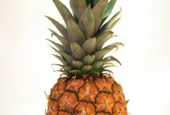 Ratoon plants produce smaller pineapples compared to the original plant.