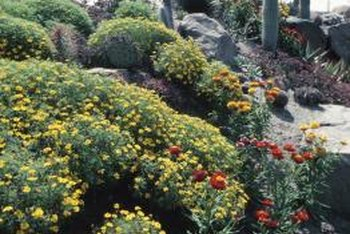 Desert plants include a variety of wildflowers and shrubs in addition to succulents like cacti.