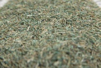 Slit seeders typically permit more uniform grass seed distribution than broadcasters.