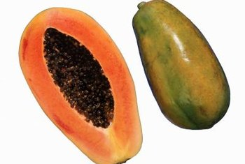 """Red Lady"" papayas can be harvested eight to nine months after sowing."