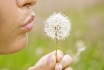 Dandelions, which are broadleaf weeds, can be easily identified.
