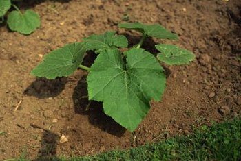 Garden soil provides nutrients for plants and allows water to flow to the roots.