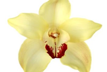 Hydroponic systems allows gardeners in all regions to enjoy beautiful orchids.