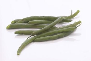 Bush beans do not require a climbing trellis for growing.