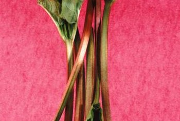Rhubarb doesn't usually require a trim in its first year.