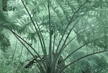 "Cycads are called ""living fossils"" because of their endurance since prehistoric times."