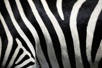 Zebra stripes create a bold decor element on a lampshade.