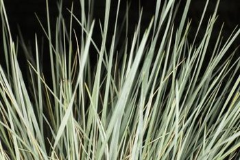 Slender-leafed grasses move easily in the slightest breeze.