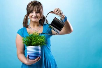 Water plants correctly to keep alkaline or tap water from harming them.
