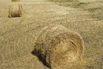 Hay bales can range in weight from 50 to 1,500 pounds.