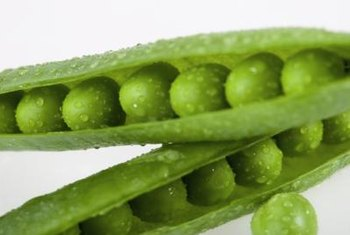 A single pod generally contains from 7 to 9 mature peas.