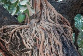 Root rot infects all types of plants.