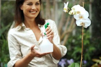 Misting an orchid with distilled water raises humidity levels.