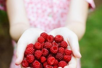 Raspberries should be plump and brightly colored when picked.