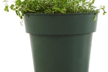 Plastic nursery pots are made in various sizes.