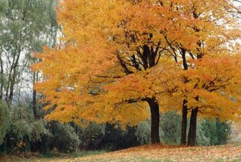 Leaf fall returns many nutrients to the soil while increasing soil tilth during decomposition.