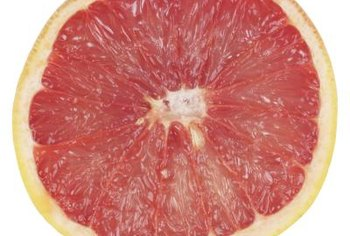 Pink grapefruits lose some color as fruit maturity progresses.
