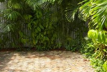 Plant-edged patios can replace lawns but still look inviting.