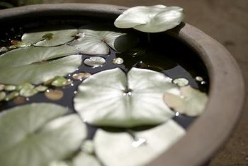 Water garden planters reduce the beauty of garden ponds to a small scale.