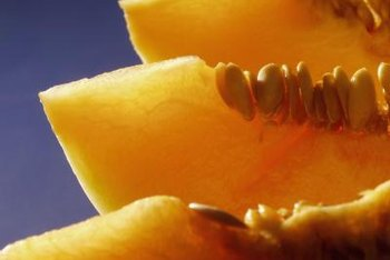 Cantaloupes are in the same plant family as cucumbers, squash and zucchini.