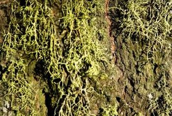 Moss will regrow in your lawn if the conditions supporting its growth are unchanged.