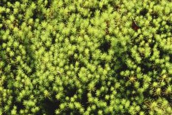 While attractive in some settings, you probably don't appreciate moss in your lawn.