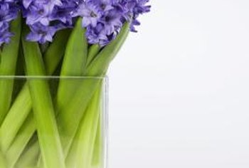 Hyacinths make spectacular cut flower bouquets.