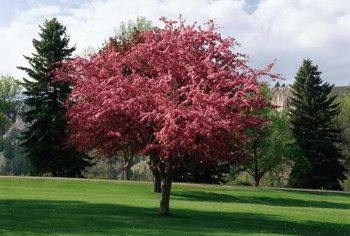 Pink, red or white crabapple flowers appear in early spring.