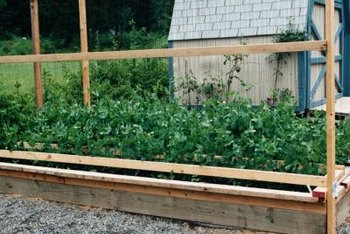 Pea trellis containers can be long rectangular boxes