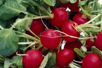 Radishes may also be attacked by aphids.