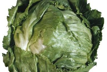 Commonly called iceberg lettuce, crisphead lettuce is common in grocery stores.