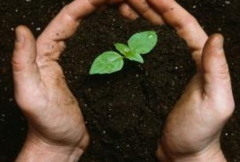 Proper soil conditions help plants absorb iron and other essential nutrients.