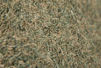 Using high quality grass seed increases the speed of germination for November planting.