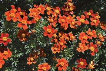 Shrubs and perennials that bloom in summer are best pruned in fall.