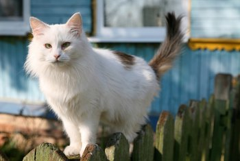 Deter cats from inhabiting your yard by making the space less pleasant for them.