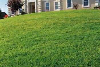 Fertilizing a lawn will help it to grow green and lush.