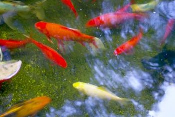 Koi glide effortlessly in the pond, while flowers nod above.