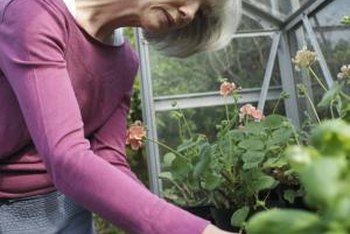 A smaller cold frame may be a better option for keeping plants warm over the winter.