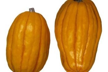 Delicata squash do not look like other types of winter squash.