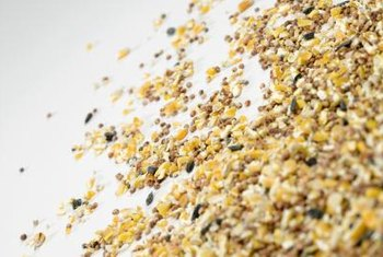 Birdseed scattered in a yard can bring additional weed growth.