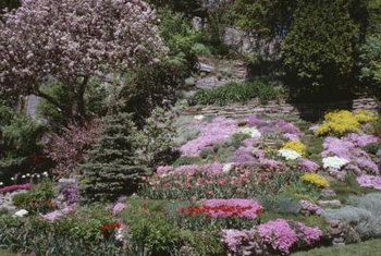 The bottom of a slope is the coolest garden area, so only hardy plants should be considered.