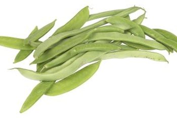 Lima beans should not be eaten raw.