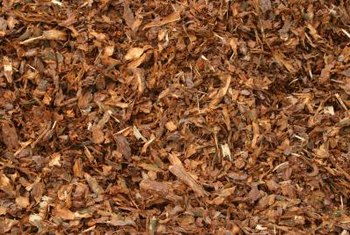 Organic material mulches reduce soil moisture loss around the barberry.