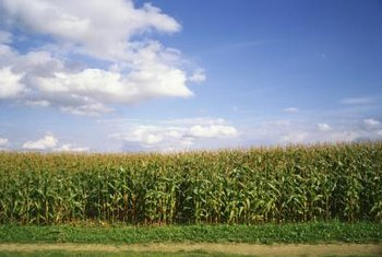 A layer of plastic will warm the soil so that you can start corn planting early.