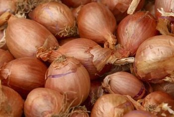 The variety of onion you should choose depends on where you live.