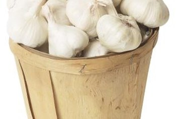 Garlic produces a large yeild with minimal effort.