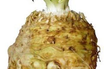 Celeriac is also known as celery root.