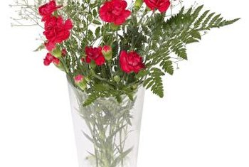 f41facad6a93 Red dianthus blooms make beautiful cut flowers.